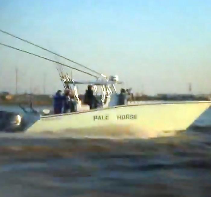 manta ray, yellowfin tuna and dorado venice, la. video still