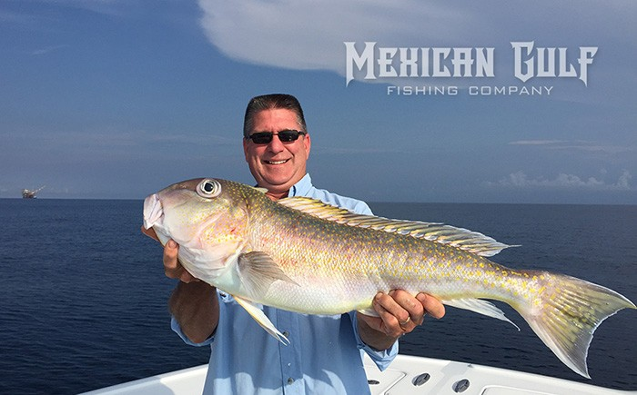 golden tilefish gulf of mexico. MGFC photo, Venice, LA tilefish Louisiana
