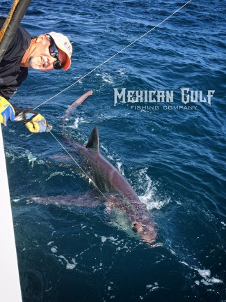 thresher sharks deep water gulf mexico. MGFC photo. Jordan Ellis