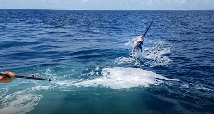 daytime swordfish photo - mgfc