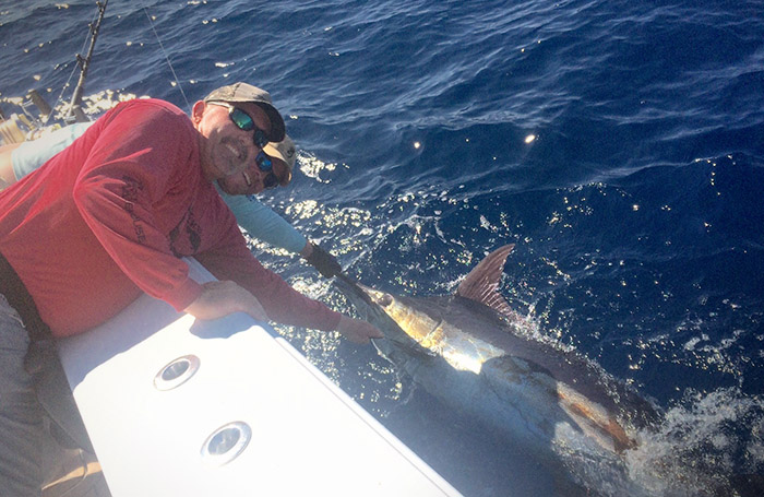 blue marlin venice, la. mgfishing.com photo - jordan wells