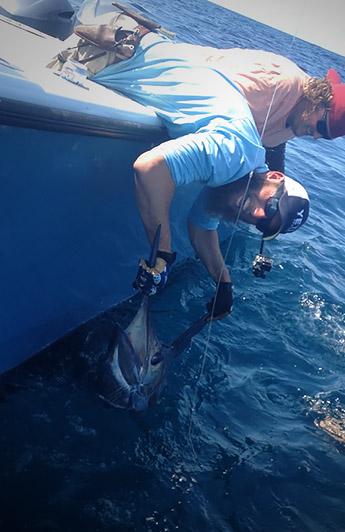 blue marlin venice, louisiana. MGFC fishing for blue marlin. travis Mayeux. April 2015