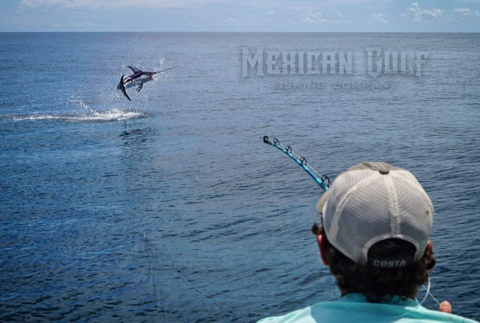 swordfish jumping. 170 lbs. MGFC photo - Jordan Ellis
